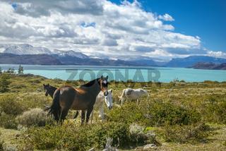 Feeding wild horses
