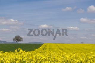 Landschaft mit Nußbaum