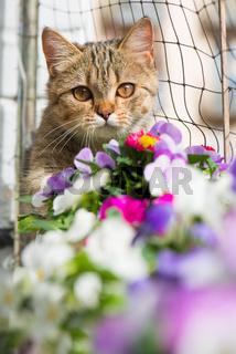 Katze am Balkon