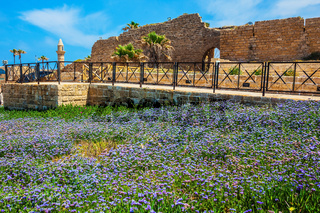 The protective walls and field of lavender flowers