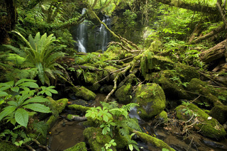 Horseshoe Falls, huebscher Wasserfall inmitten von ueppigem, mit Moosen und Flechten uebersaetem, gemaessigtem Regenwald, Catlins, Southland, Suedinsel, Neuseeland, Horseshoe Falls, beautiful waterfall amidst lush temperate rainforest with trees and rocks