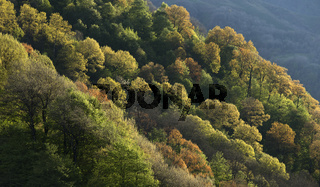 Forest growing on the hillside