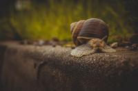 Snail on the roadside.