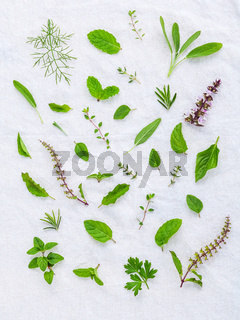 Various fresh herbs from the garden holy basil flower, basil flower,rosemary,oregano, sage,parsley ,thyme, pepper mint and fennel over white fabric background.