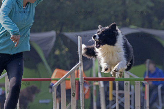 Dog agility 2015 at Hamburg, Germany