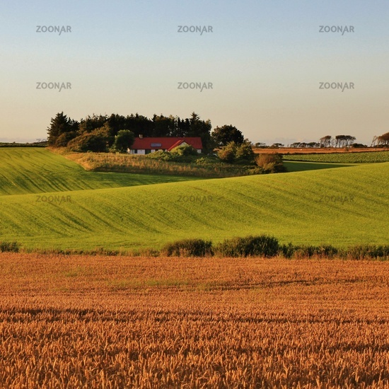 Beautiful shaped hills and meadows in Jylland, Denmark. Rural summer scene.
