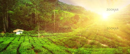 Village house at tea plantation under sunset sky. Malaysia
