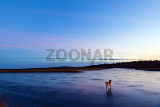 Finnland, finnisch Lappland, Ivalojoki Fluss zum Sonnenuntergang