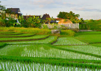 Villa in rice fields. Indonesia