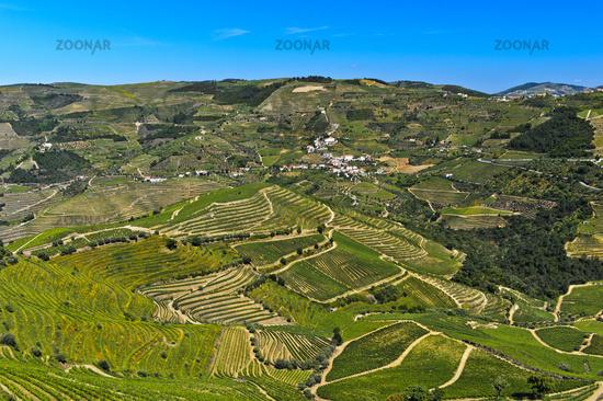 Terraced vineyards in the Rio Pinhao Valley, Alto Douro Wine Region, Portugal