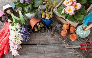 Frische Blumen im Fruehjahr