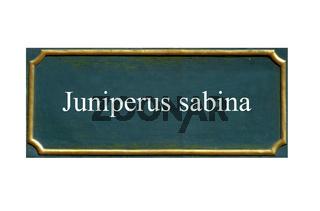schild Sadebaum, Stinkwacholder,unechter Wacholder,Juniperus sabina