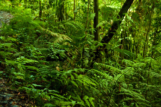 tropical green forest view.