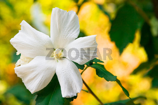 white flower in the field