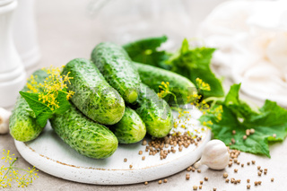 Fresh cucumbers and ingredients for conservation. Preparation marinated salted cucumbers with herbs and salt.