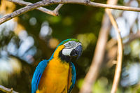 Parrot in Bali Island Indonesia