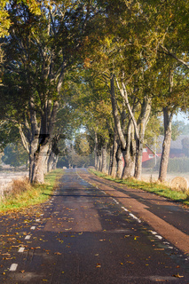 Tree avenue in the countryside