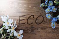 Sunny Crocus And Hyacinth, Text Eco