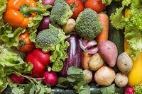 Various vegetables with fresh green lettuce
