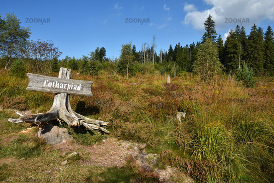 nature trail; Black Forest; Germany;
