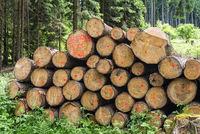 Symbolic Photo Forestry