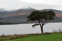 A Single tree at the lake