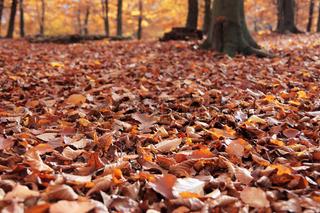 Waldboden bedeckt mit Herbstblättern im Detail