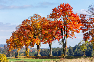 Autumn landscape with fall colored trees