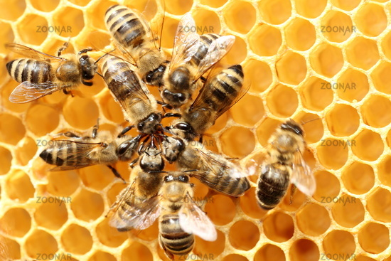 dancing bees in a circle