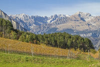 Vineyards in front of the mighty peaks of the Brenta Group