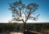 Tree at sunset on overlook of Santa Fe, New Mexico, USA.