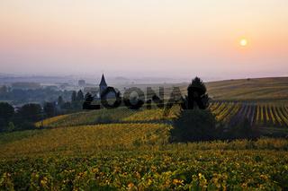 Weinberge von Hunawihr, Elsass, France