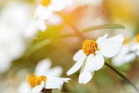 White flowers under sunlight