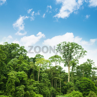 Tropical rainforest landscape with blue sky