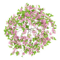 top view of flowering plum tree isolated on white background