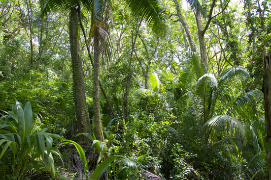 Jungle on the Seychelles
