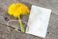 Bunch of dandelion flowers and blank card