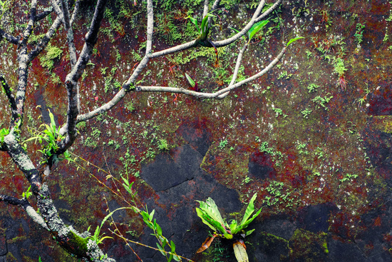 Mossy wet wall and tropical plants