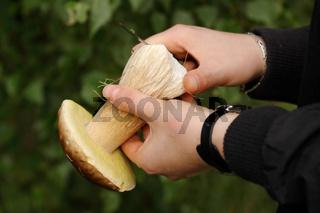 Pilze putzen