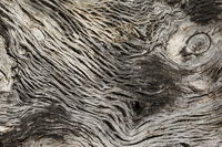 Texture / Background / Motif - old bony tree bark