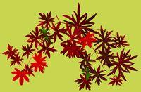 Fall_leaf_figure_green1
