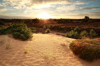 gold sunrise over sand dune