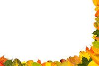 Viele Blätter in Herbstfarben