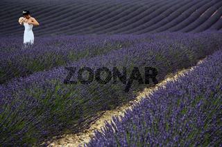 Braut im Lavendel, Plateau Valensole, Provence, Frankreich