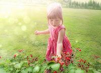 Sweet little girl collecting raspberry