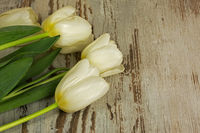 White tulips on a wooden table