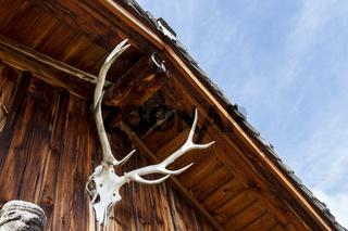 Ein weißes Hirschgeweih an einer Holzhütte in den Alpen.