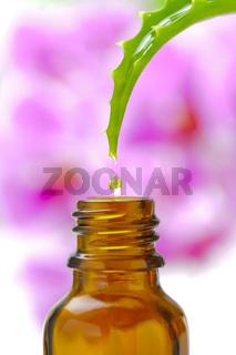 Tropfen von Aloe vera als Alternativmedizin