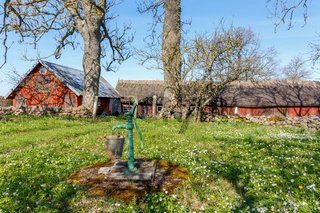 Water pump with a bucket in a farm garden and flowering spring flowers
