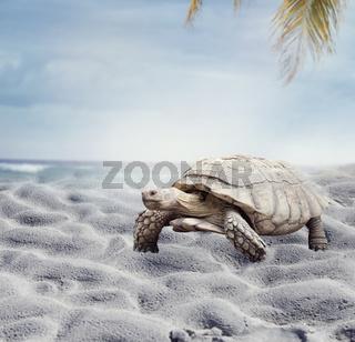 giant Galapagos turtle